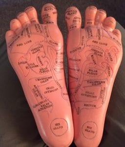 Reflexology Foot Model Reflexology Healing Medfield MA