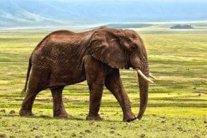 elephant Reflexology Healing Medfield MA